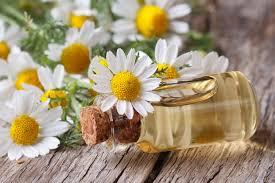 index-1 6 Best Essential Oils That Help Manage Pet Allergies