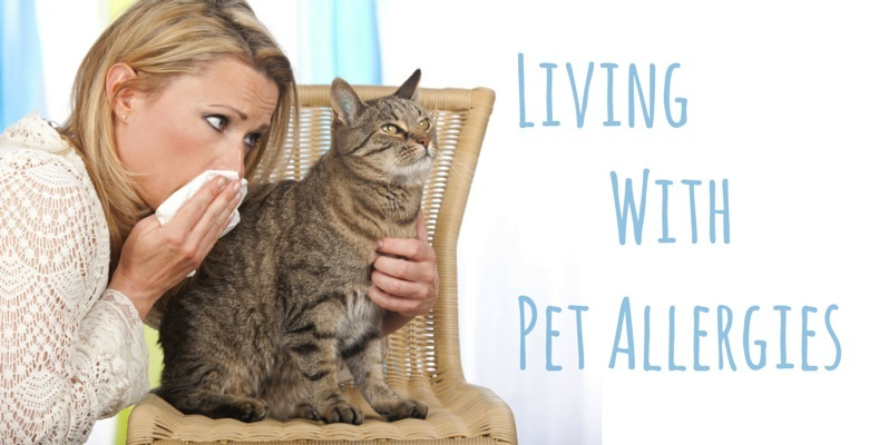 pet-allergies 6 Best Essential Oils For Pet Allergies